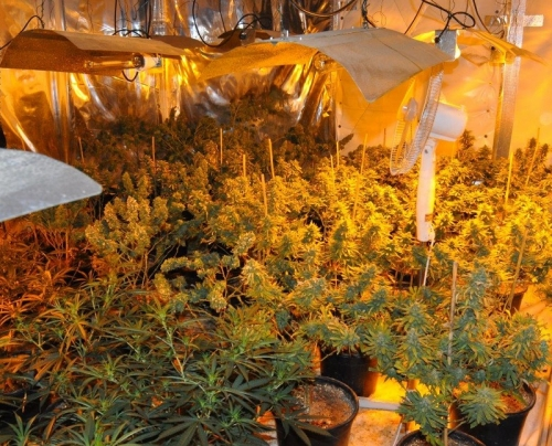 Suspected Cannabis Farm estimated around £400,000 discovered in Hartlepool